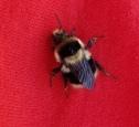 bekkiesbeefriend