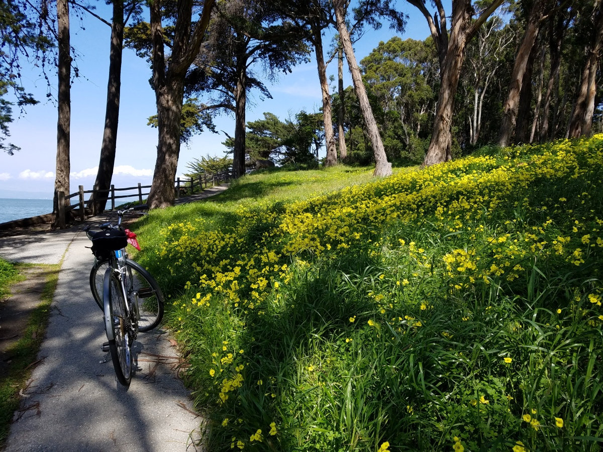 Spring Time On The Bay Trail
